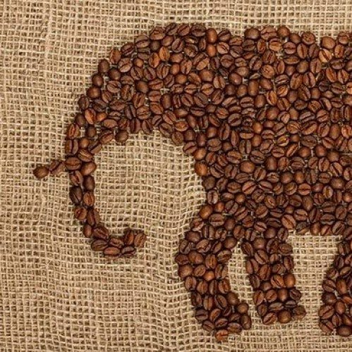 Coffee With An Elephant | Guidance Corner | Bridge to Better Living